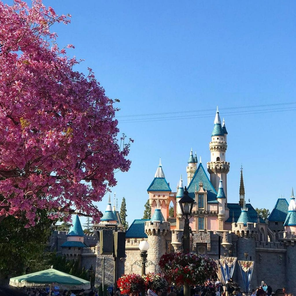 Another_magical_day_at__disneyland___