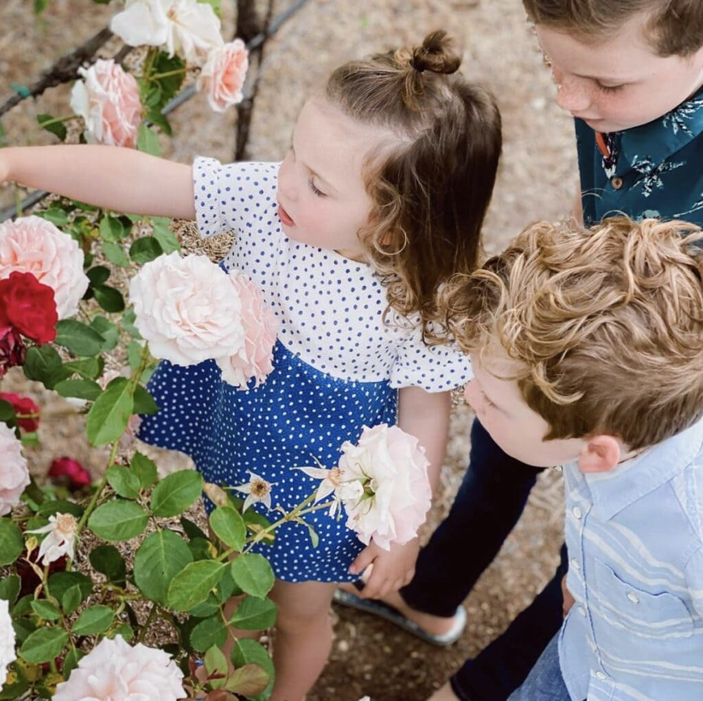 Young girl and her two older male siblings all stop to admire a rose bush with light pink and red blooms